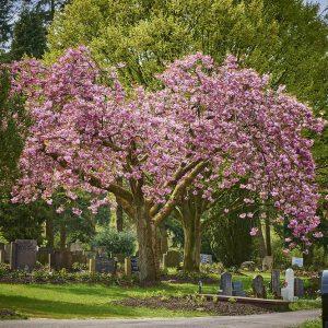 Begraafplaats Crematorium Moscowa - Estia uitvaarten