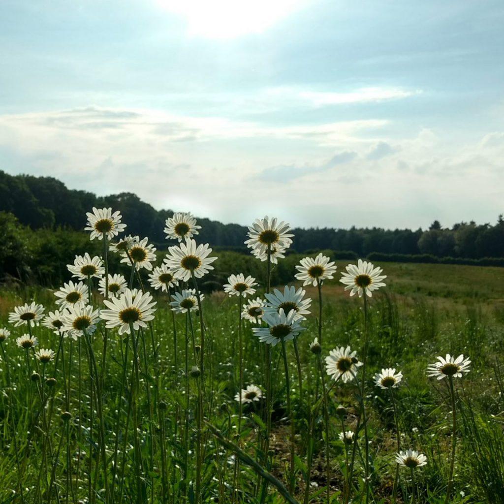 Natuurbegraafplaats Koningsakker bloemen, Estia Uitvaarten