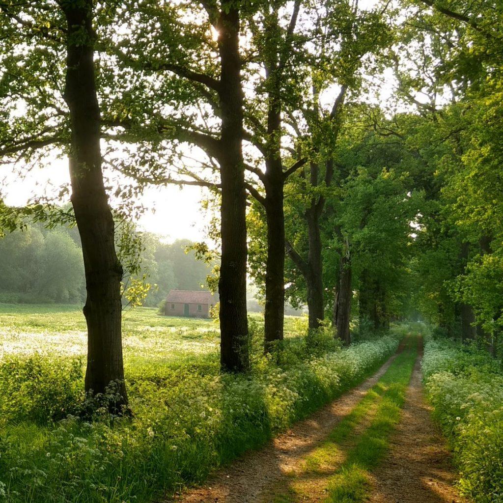 Natuurbegraafplaats Koningsakker weg, Estia uitvaarten